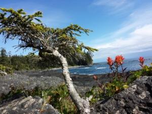 juan de fuca provincial park