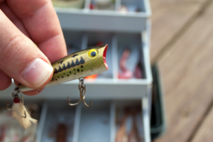 lures or live bait - when to use lures
