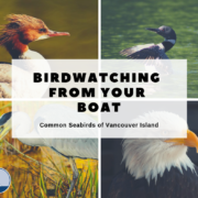 Birdwatching - common seabirds of Vancouver Island