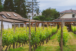 Deep Cove Winery in Sidney BC