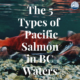 5 types of pacific salmon in british columbia