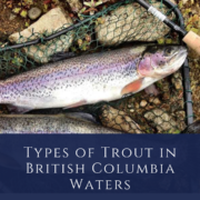 Types of Trout in British Columbia Waters