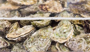 types of shellfish in BC - oysters