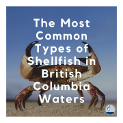 The Most Common Types of Shellfish in British Columbia Waters