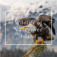 Wildlife of Vancouver Island