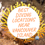 Best Diving Locations Near Vancouver Island