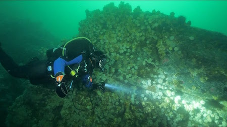 Diving at Clark Rock in Nanaimo BC