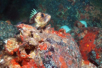 Gabriola Passage Diving Around Vancouver Island