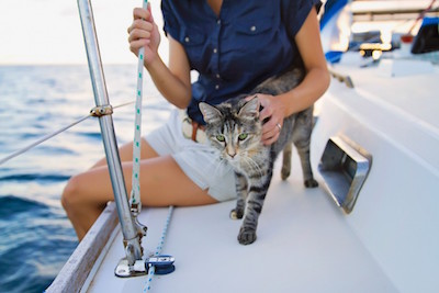 old boating superstitions - having cats on board