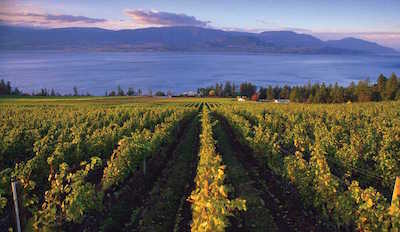Vancouver Island Wineries