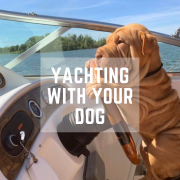 Yachting with your Dog