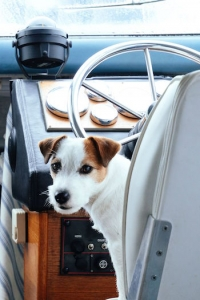 boating with your dog - don't let the dog drive the boat