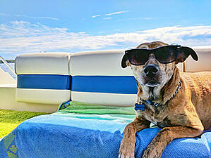 dog in the sun on a yacht