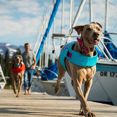 yachting with your dog - make them wear dog lifejackets