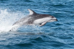 boating with marine mammals - dolphins