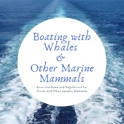 boating with whales feature