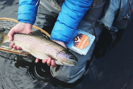 Anglers spoiled for choice - trout